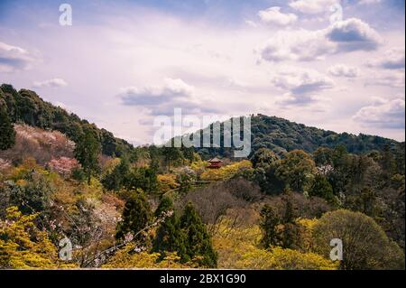 Cherry Blossom season 2019. Colourful landscape with blossom covered hillsides and Japanese Pagoda near the Kiyomizu-dera temple, Kyoto, Japan