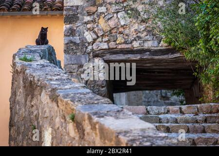 France, Seillans, certified the Most beautiful Villages of France, black cat sitting on a wall in an alley in the old village