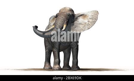 elephant on sand area - isolated on white background - Stock Photo