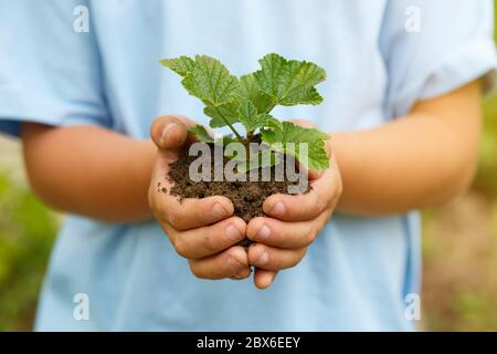 New life plant child hands holding tree nature living concept garden gardening