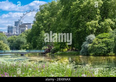 UK, England, London, Westminster St. James's park. Spring flower gardens in the royal park with the London Eye and buildings on Whitehall