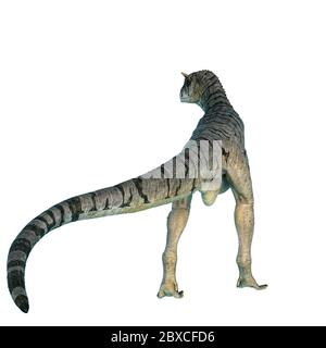 carnotaurus sastrei in a white background. This carnotaurus sastrei in clipping path is very useful for graphic design creations, 3d illustration - Stock Photo