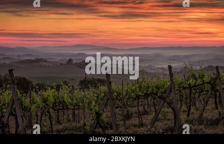 Sunrise over a vineyard in Tuscany, Italy with fog settling in the low lying areas - Stock Photo