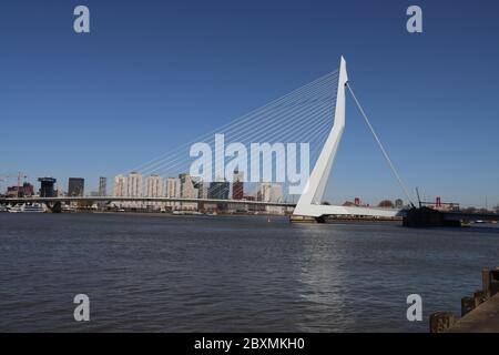 White erasmusbrug bridge over river Nieuwe Maas in the city center of Rotterdam in the Nehterlands - Stock Photo