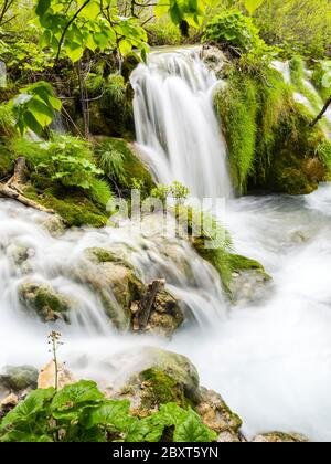 Plitvice lakes intensive vivid Green forest in Spring season in Croatia Europe empty cascading waterfall river flow riverflow long exposure