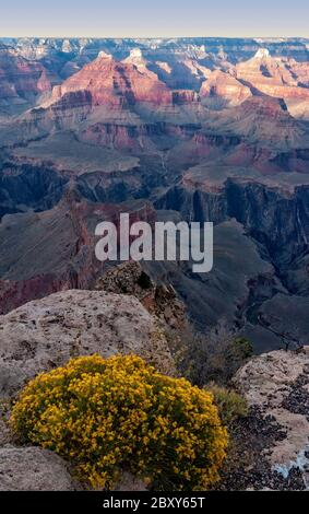 Grand Canyon National park with yellow wildfowers. - Stock Photo