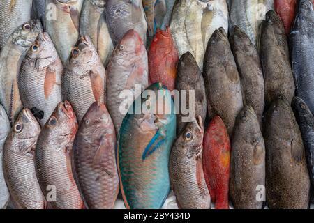 Fresh sea fish for sell at the street food market in Kota Kinabalu, island Borneo, Malaysia, close up seafood