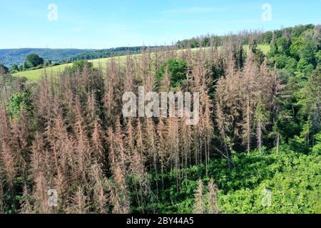 Fichten, Fichte sind vertrocknet und durch Borkenkäfer geschädigt, Fichtenwald, Fichtenwälder, Nadelwälder, Nadelwald, Fichtensterben, Waldsterben, Kl