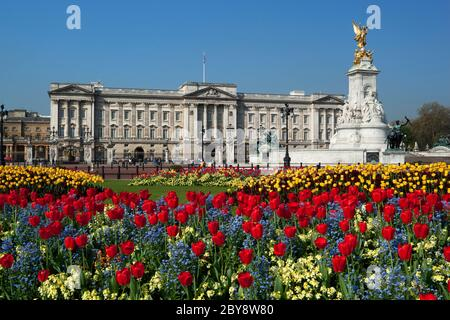 Buckingham Palace and the Queen Victoria Memorial with Spring Tulips, London, England, UK