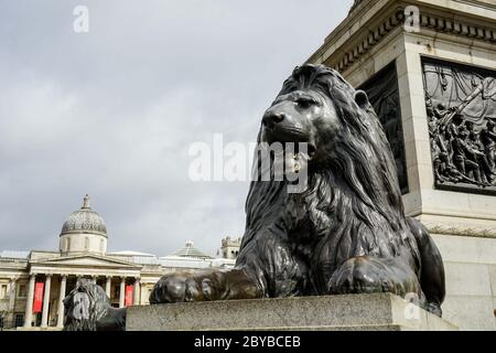 Lion at the base of the Nelson column in London in Trafalgar square - Stock Photo
