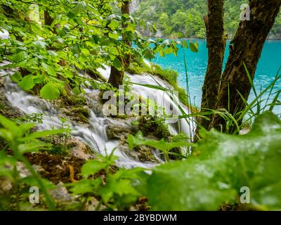 Plitvice lakes intensive vivid Green forest in Spring season in Croatia Europe empty cascading waterfall river flow riverflow through foliage