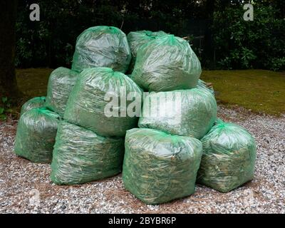 Group of Green clear plastic bags filled with organic  waste from garden and yard - Stock Photo