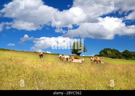 few alpine cows on summer pastoral - Stock Photo