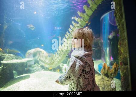 Child, enjoying sea life in aquarium, watching fishes - Stock Photo