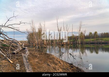 Dead dry tree trunks on an old pond or wetland - Stock Photo
