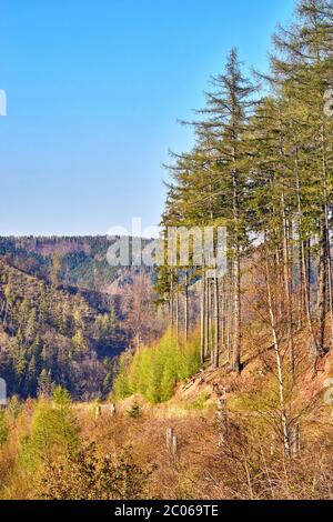 Harz mountains with coniferous trees in the forest under a blue sky. - Stock Photo