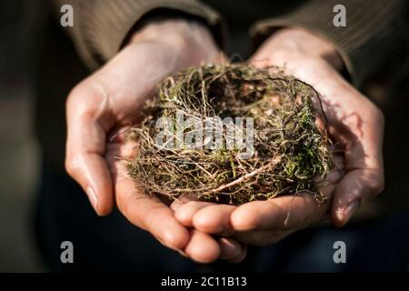 Hands holding a small bids nest - Stock Photo