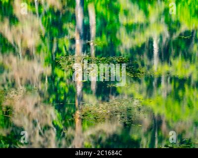 Lake with waterfall and derelict old sawmill and watermill Cogrljevo jezero Croatia Europe almost artistic water reflections of Green Spring forest - Stock Photo
