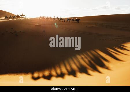 Camel caravan group in desert sand dunes at sunset light with beautiful shadows. Tourist entertainment in Morocco, Sahara.