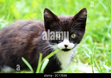 Black and white kitten on a green grass background Stock Photo