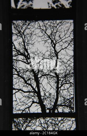 Fine 70s vintage contact print black and white extreme photography - Stock Photo