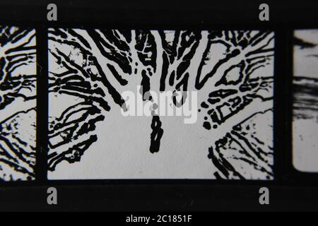Fine 70s vintage contact print black and white extreme photography of a haunted and glowing tree. - Stock Photo
