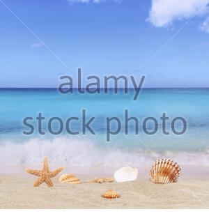 strandszene hintergrund im sommer, urlaub, ferien mit meer, sandstrand, seestern und muscheln