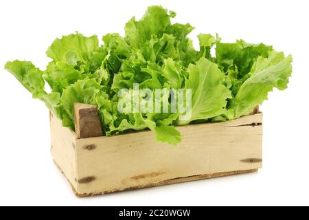 freshly harvested endive in a wooden box on a white background - Stock Photo