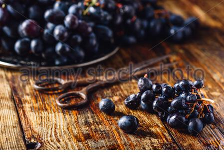 Blue Vine Grapes and Rusty Scissors on Wooden Surface. - Stock Photo