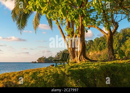 Empty bench under a tropical tree at sunset by the Pacific Ocean humid rainforest, Corcovado national park, Osa Peninsula, Costa Rica. - Stock Photo
