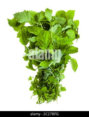 bunch of fresh lemon balm (melissa officinalis) herb isolated on white background - Stock Photo