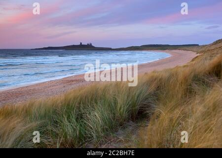 Sunrise over Embleton Bay and the ruins of medieval Dunstanburgh Castle, Alnwick, Northumberland, England, United Kingdom, Europe