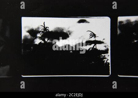 Fine 70s vintage contact print black and white extreme photography of wild plants growing in the fields. - Stock Photo