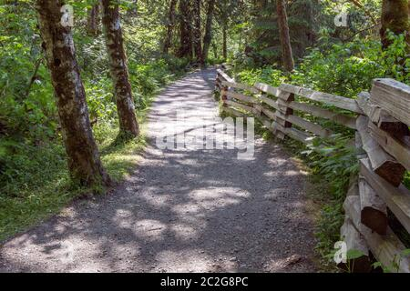 Trail or walking path through the thick forest with the wooden fence along the road. Nice leading lines, quiet and relaxing atmosphere. - Stock Photo