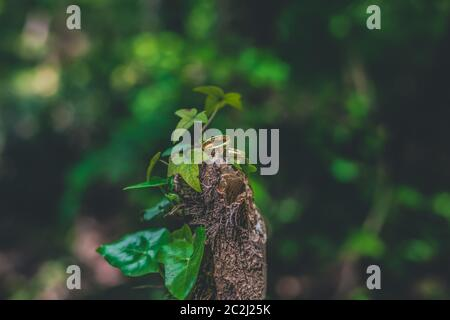 Plain gold wedding rings placed between green leaves on a broken tree in the woods, with copy space - Stock Photo