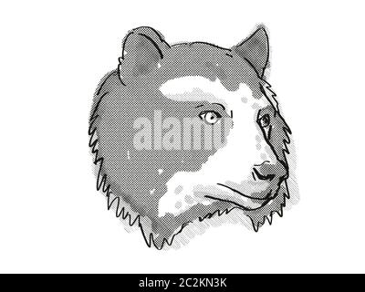 Retro cartoon style drawing of head of a Spectacled Bear also known as the Andean bear, an endangered wildlife species on isolated white background do - Stock Photo