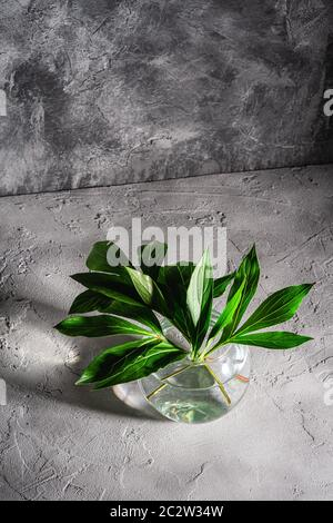 Peony green leaves in glass sphere vase with water on textured stone background, angle view