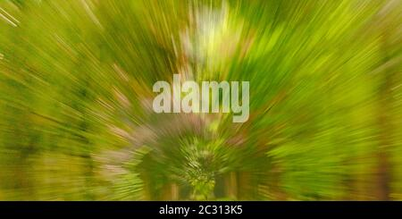Abstract green background texture with radial lines though intentional camera movement