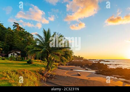 Sunset along a Pacific Coast beach of Costa Rica inside Corcovado national park, with focus on Palm Tree. - Stock Photo