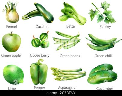 Set of green vegetables in watercolor style. Fennel, zucchini, bette, parsley, apple, goose berry, beans, chili, lime pepper asparagus cucumber Vector - Stock Photo