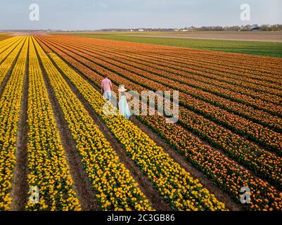 drone view of couple in flower field , tulip field during sunset, men and woman walking in tulip field in the Netherlands Noordo - Stock Photo