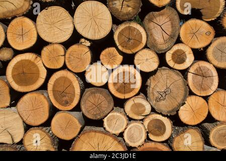 Pile of Wood, Wood Stack,Italy