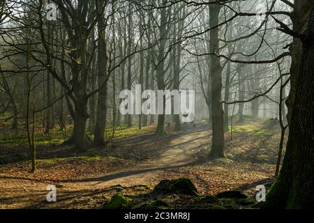 Rays or shafts of sunlight, misty morning, trees & dog walkers on path - quiet scenic woodland, Middleton Woods, Ilkley, West Yorkshire, England, UK. - Stock Photo