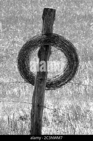 Extra barbed wire roll stored on fence post. - Stock Photo