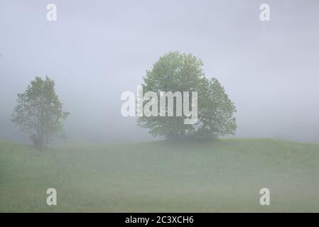 Bäume im Nebel auf einem Hügel - Stock Photo
