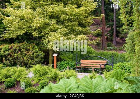 bench empty seat in nature. Chair in park or garden near bushes and green trees. Relaxation, tranquil and idyllic scene in foliage meadow.  park bench - Stock Photo