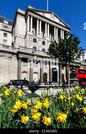 Bank of England on Threadneedle Street in the City of London with spring Daffodils, London, England, United Kingdom, Europe - Stock Photo