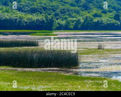 Swampy lake Ponikve island Krk Croatia Europe - Stock Photo