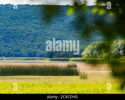 Swampy lake behind tree branch Ponikve island Krk Croatia Europe - Stock Photo