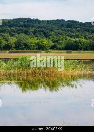 Swampy lake mirror image mirroring Ponikve island Krk Croatia Europe - Stock Photo